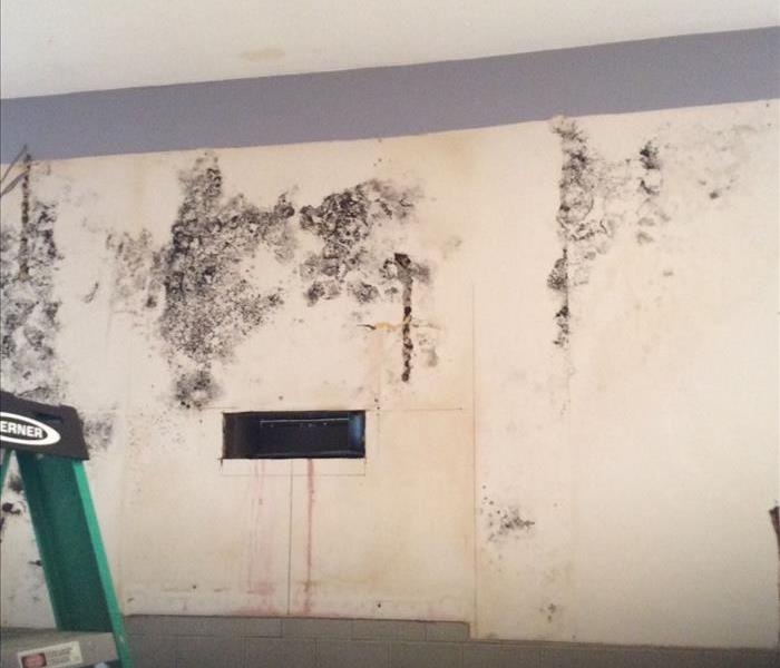Mold Discovery in Andover, MA